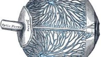 Apa itu Neuritis Vestibular? dan terapi fisik dapat membantu